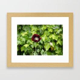 Opium Flower Framed Art Print