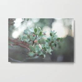 Red Berries on a Tree in Yosemite National Park Metal Print