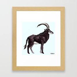 Antelope Framed Art Print