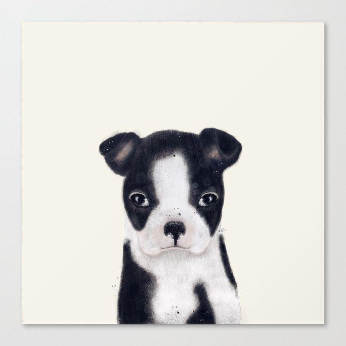 little boston terrier Canvas Print