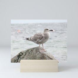 Seagull sitting on a rock Mini Art Print
