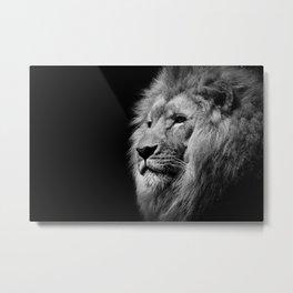 Lion Black and white Metal Print