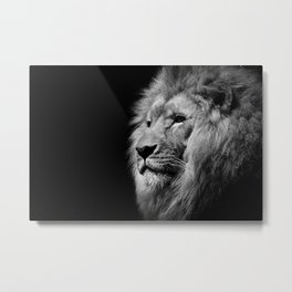 Lion Black and white Metal Print