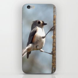 Tufted titmouse lunch iPhone Skin