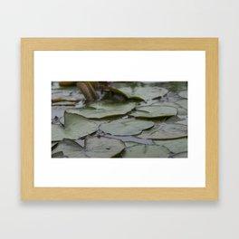 Leap Frog Framed Art Print
