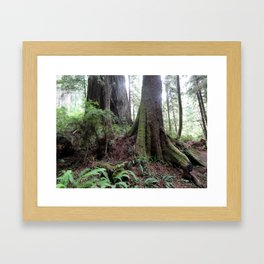 Giant Redwoods Rainforest 04 Framed Art Print