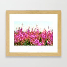 Field of lupins and wildflowers on Brier Island, Nova Scotia Framed Art Print