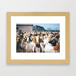 Goats! Framed Art Print
