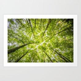 Tree Forest Sky Art Print