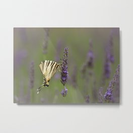 Lavender and a Butterfly-An Essential Friend Metal Print