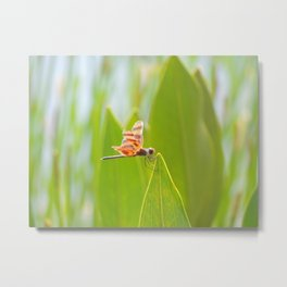 dragonfly at the pond Metal Print