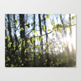 Sunset Forest Canvas Print