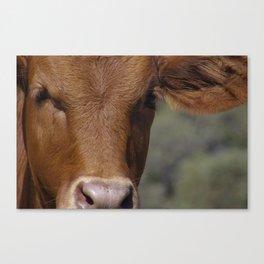 Ellen @ Happy Hooves Farm Sanctuary Australia Canvas Print