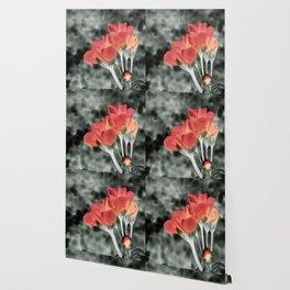 Coral Orange Peach Flowers Wallpaper