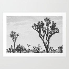 JOSHUA TREE XXII Art Print