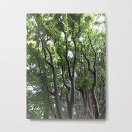 Trees at the Japanese Tea Garden in San Francisco Metal Print
