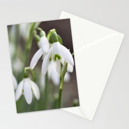 Snowdrop   spring   nature photography   Flowers Stationery Cards