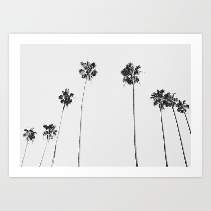 Black & White Palms Art Print