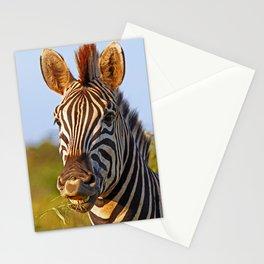 Smiling Zebra, Africa wildlife Stationery Cards
