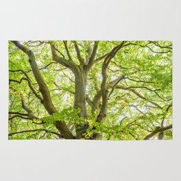 Beech Tree Rug