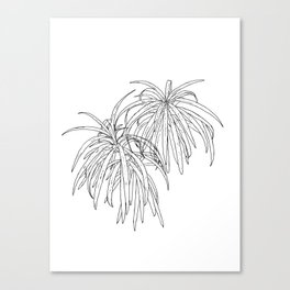 Henkelii Tree Leaves Drawing (black on white) Canvas Print