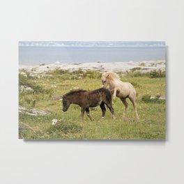 Wild Irish Foals Metal Print