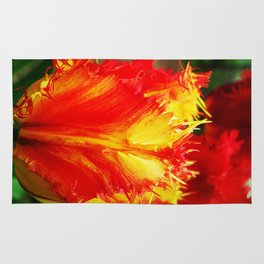Curly Tulip With Vivid Red And Yellow Rug