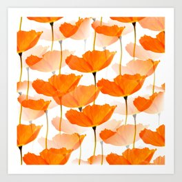 Orange Poppies On A White Background #decor #society6 #buyart Art Print