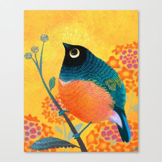 Superb Starling Canvas Print
