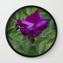 Bumble Bee On Wild Rose Wall Clock