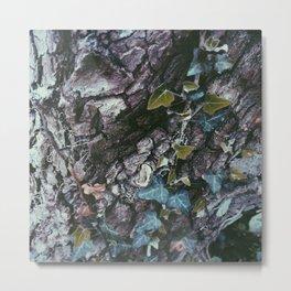 Ivy Growing on a Tree Metal Print