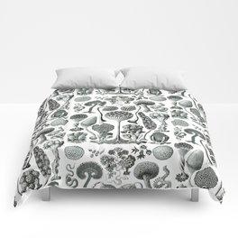 Ernst Haeckel - Mycetozoa Comforters