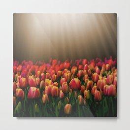 Colorful sunlight tulips Metal Print