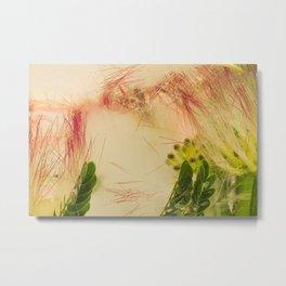 Mimosa Tree #10 Metal Print