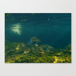 UNDERWATER VI. Canvas Print