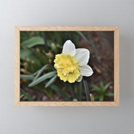 New Spring Daffodil Framed Mini Art Print