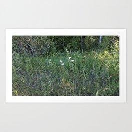 Photography field in Minnest Art Print
