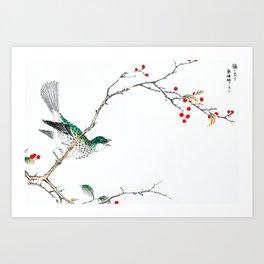 Bulbul Sitting On Holly Bush - Antique Japanese Woodblock Print Art By Numata Kashu Art Print