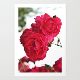 Chanson des roses Art Print