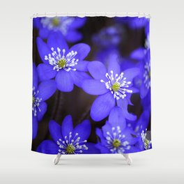First Spring Flowers in Forest Shower Curtain