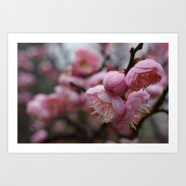 Raindrops on Blossoms Art Print