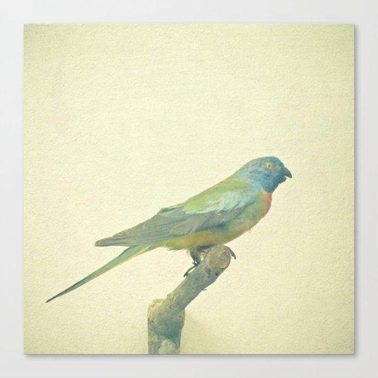 Bird Study #3 Canvas Print