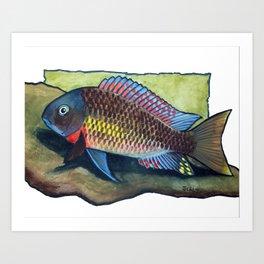 Tropheus Moorii Kasanga Rainbow Cichlid Art Print
