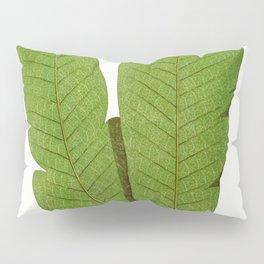 Edward Joseph Lowe - Polypodium Musaefolium Pillow Sham