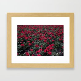 Field of Flowers Framed Art Print