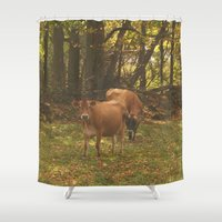cows Shower Curtains featuring Cows by Ashley Callan