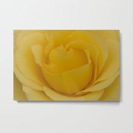 Delicate Yellow Rose Fine Art Photo Metal Print