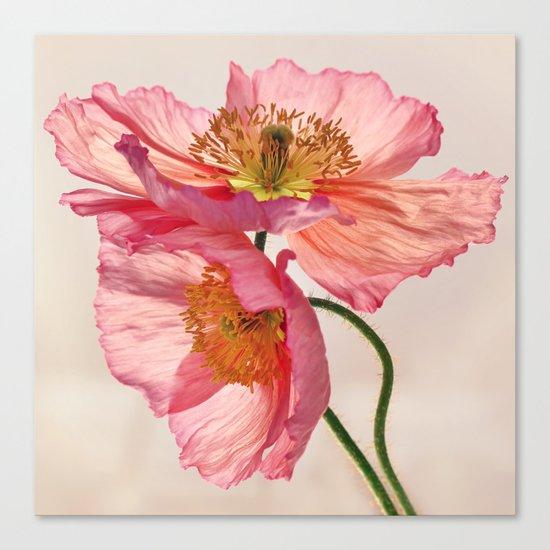 Like Light through Silk - peach / pink translucent poppy floral Canvas Print