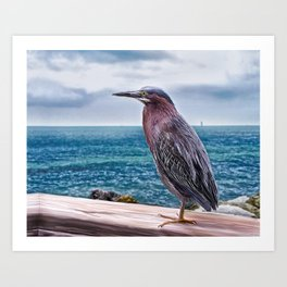 Key West Green Heron -  Photo painting Art Print