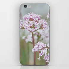 Tender Spring Flowers iPhone & iPod Skin